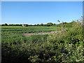 TL5771 : Pillbox north of Wicken by Hugh Venables