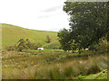 SJ1435 : Boggy valley above Pentre by Row17