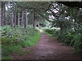 TM3450 : Footpath on the edge of the forest by Roger Jones