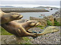 NF7203 : Otters at Barra Ferry by Colin Smith