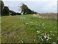 TF3004 : Near Pigeons' Farm, Thorney by Richard Humphrey