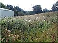 SO3015 : Field of weeds, Nantgavenny Lane, Mardy by Jaggery