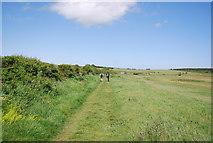 NU2422 : Northumberland Coast Path by N Chadwick