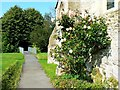 SU0053 : Roses by the Church of All Saints, West Lavington by Brian Robert Marshall
