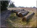 SO9154 : Felled Trees by Gordon Griffiths