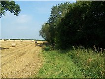 ST5332 : Footpath Near Barton St David by Geoff Pick