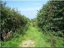 ST5431 : Footpath Off Blind Lane by Geoff Pick