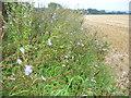 SU7337 : Downland by Copse Close by Colin Smith