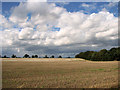 TF7421 : Undulating field west of Middle Belt, Gayton by Evelyn Simak