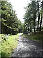 NX6664 : Forest track in Laurieston Forest by Bob Peace
