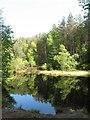 NJ3658 : Longhowe Loch, near White Ash Hill Wood by Doug Mortimer
