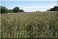 SP2580 : Beans uncut  by Robin Stott