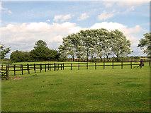 TF8707 : A row of poplars, Holme Hale by Evelyn Simak