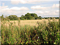 TF8707 : Fields east of Brown's Lane, Holme Hale by Evelyn Simak