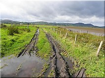 C4548 : Mucky lane, Glasha Point by Kenneth  Allen