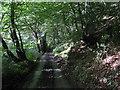 SX8181 : Beadon Lane running north-northwest downhill by Robin Stott