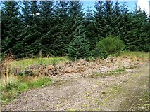 NS6583 : Waterhead, forestry plantation [2] by Robert Murray