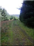 NS6583 : Drove Hill, forestry tracks [2] by Robert Murray