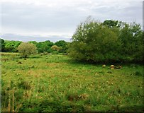 TQ0215 : Scrubland by the Arun Valley Line by N Chadwick