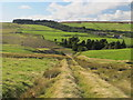 NY9546 : Course of old railway incline below Sikehead lead mine by Mike Quinn