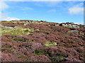 SE1461 : Palleys Crags on Braithwaite Moor by Chris Heaton