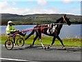 C2028 : Trotting horse, Tirhomin by Kenneth  Allen