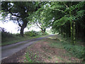 SX8283 : Lane past Barton Down plantation  by Robin Stott
