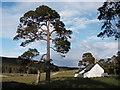NO0393 : Luibeg Cottage, Mar Lodge Estate, Cairngorms by Matt McConway