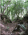SX8382 : Track south of Round O Plantation  by Robin Stott