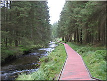 SN8587 : Boardwalk beside the River Severn by David Purchase