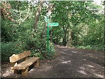 TQ3870 : Green Chain Walk junction in Summerhouse Wood by David Anstiss
