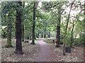 TQ3972 : Downham Woodlands Walk (2) by David Anstiss