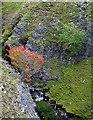 NY9100 : Rowan tree in Swinner Gill by Karl and Ali