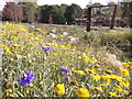 TQ3774 : Dry Stream Garden, Ladywell Fields by David Anstiss