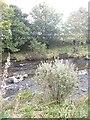 NJ5140 : Deveron riverbank in autumn by Stanley Howe