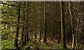 J4477 : Trees, Ballysallagh forest, Craigantlet by Albert Bridge