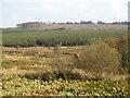 NX5977 : Forest below Darsalloch Hill by Bob Peace