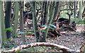 TL4201 : Look towards the camera please deer by Roger Jones
