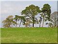 NO1951 : Hilltop trees near Creuchies by Maigheach-gheal