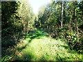 ST8222 : Path through the trees by Jonathan Kington