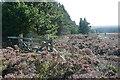 SE7899 : Wheeldale Plantation by Graham Horn