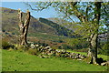 SH5848 : Trees at Beddgelert, Gwynedd by Peter Trimming
