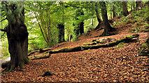 J4681 : Autumn leaves, Crawfordsburn Country Park by Albert Bridge