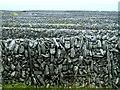 L9701 : Carrowmarlaman: Feidin walls by louise price