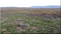 SE4996 : Osmotherley Moor by Richard Webb
