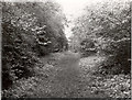 TL1979 : Fixed point 12 (1973), Monk's Wood NNR by D.O. Elias