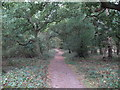 TL4004 : Bridleway through Galleyhill Green by Roger Jones