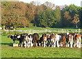 SU8284 : Feeding calves by Graham Horn