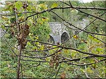 N9171 : Through autumnal leaves by James Allan