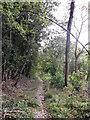 TQ4160 : Crown Ash Hill (track) by David Anstiss